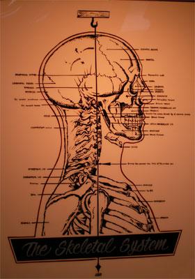 the Skeltal System